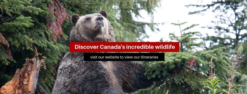 """A banner that reads """"Discover Canada's incredible wildlife"""""""